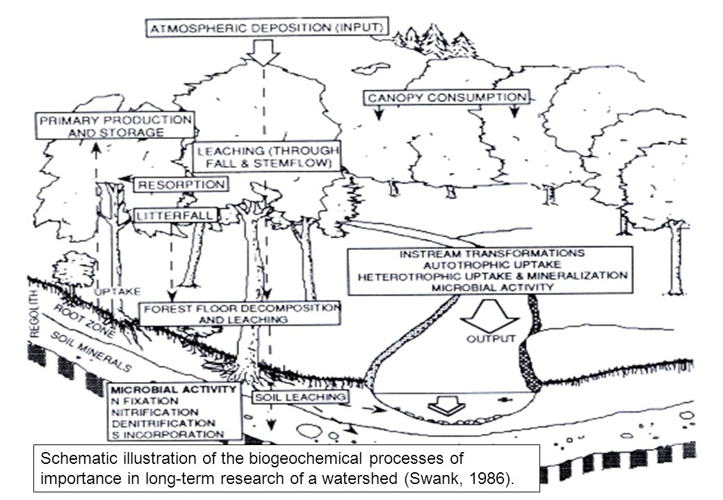 57 Schematic illustration of the biogeochemical processes of importance in long-term research of a watershed (Swank, 1986).