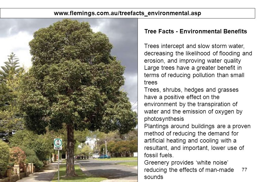 77   Tree Facts - Environmental Benefits Trees intercept and slow storm water, decreasing the likelihood of flooding and erosion, and improving water quality Large trees have a greater benefit in terms of reducing pollution than small trees Trees, shrubs, hedges and grasses have a positive effect on the environment by the transpiration of water and the emission of oxygen by photosynthesis Plantings around buildings are a proven method of reducing the demand for artificial heating and cooling with a resultant, and important, lower use of fossil fuels.