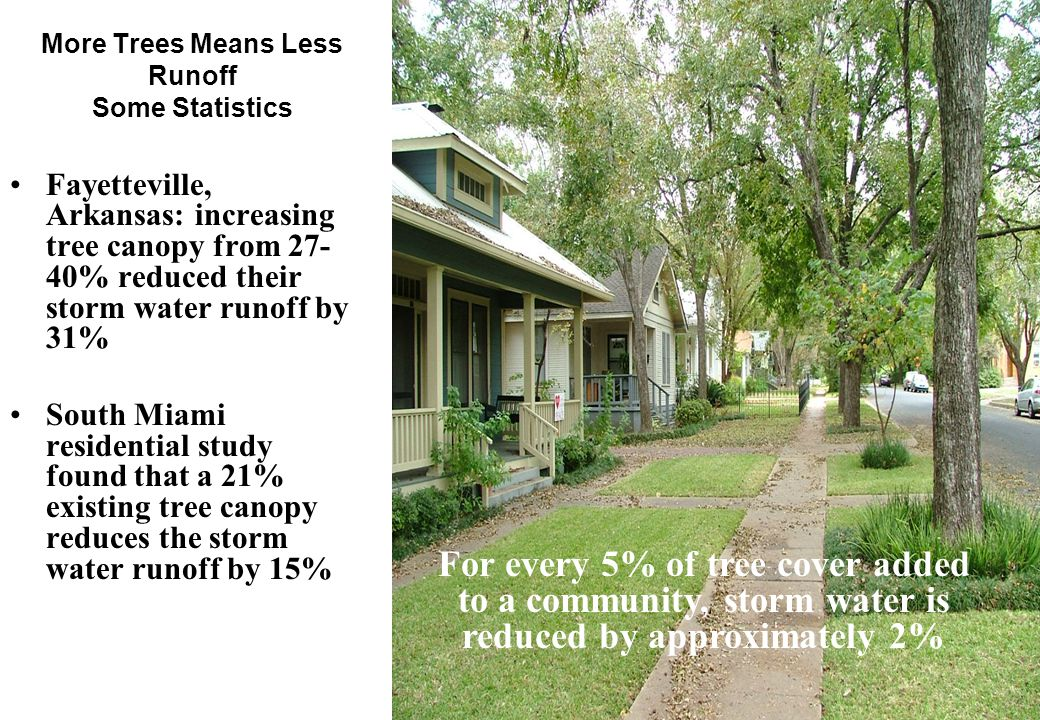 9 More Trees Means Less Runoff Some Statistics Fayetteville, Arkansas: increasing tree canopy from 27- 40% reduced their storm water runoff by 31% South Miami residential study found that a 21% existing tree canopy reduces the storm water runoff by 15% For every 5% of tree cover added to a community, storm water is reduced by approximately 2%