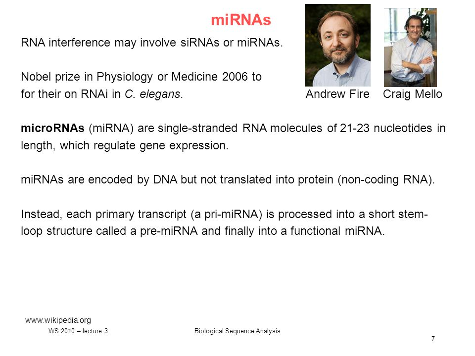 Biological Sequence Analysis 7 miRNAs www.wikipedia.org RNA interference may involve siRNAs or miRNAs.