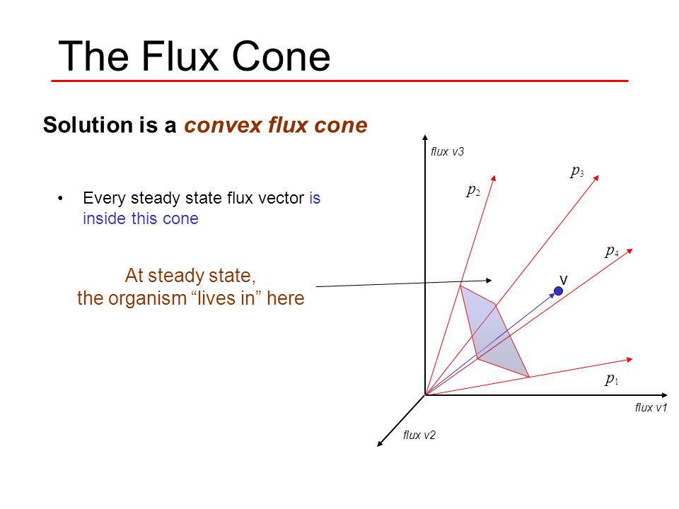 The Flux Cone Every steady state flux vector is inside this cone Edges of the cone are circumscribed by Extreme Pathways v p1 p1 p2 p2 p3 p3 p4 p4 flux v1 flux v2 flux v3 Solution is a convex flux cone At steady state, the organism lives in here