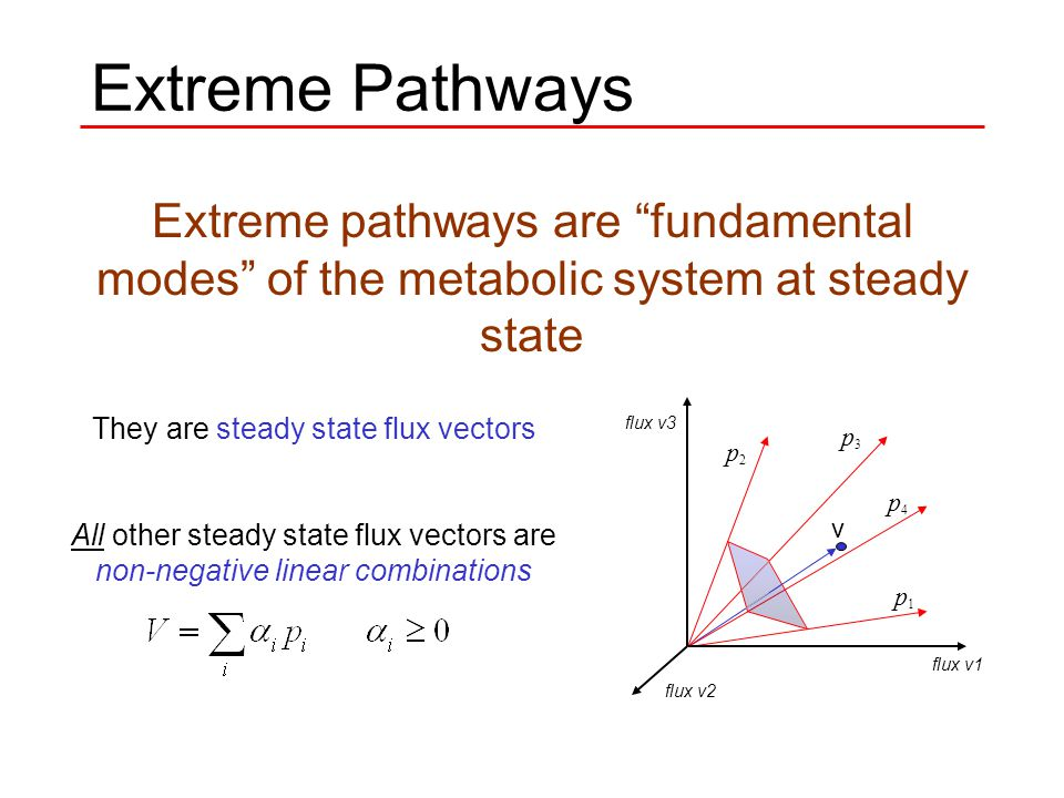 Extreme Pathways Extreme pathways are fundamental modes of the metabolic system at steady state They are steady state flux vectors All other steady state flux vectors are non-negative linear combinations v p1 p1 p2 p2 p3 p3 p4 p4 flux v1 flux v2 flux v3