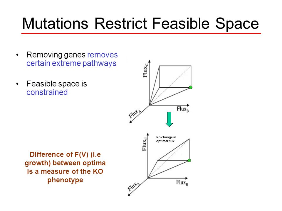 Mutations Restrict Feasible Space Removing genes removes certain extreme pathways Feasible space is constrained If original optimal flux is outside new space, new optimal flux is predicted Calculate new optimal flux No change in optimal flux Difference of F(V) (i.e growth) between optima is a measure of the KO phenotype