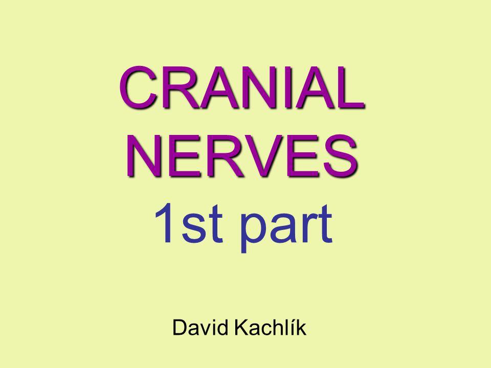 CRANIAL NERVES CRANIAL NERVES 1st part David Kachlík