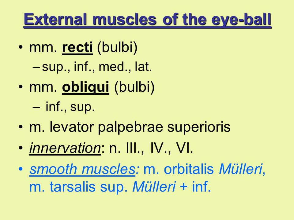 External muscles of the eye-ball mm. recti (bulbi) –sup., inf., med., lat. mm. obliqui (bulbi) – inf., sup. m. levator palpebrae superioris innervatio