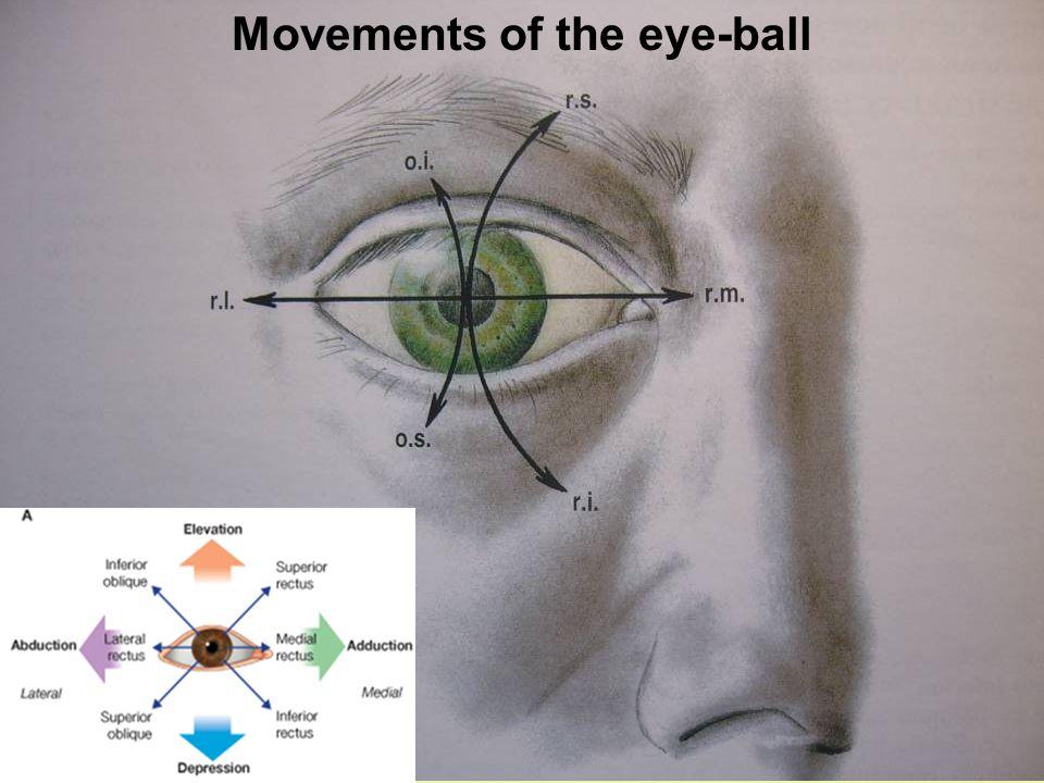 Movements of the eye-ball
