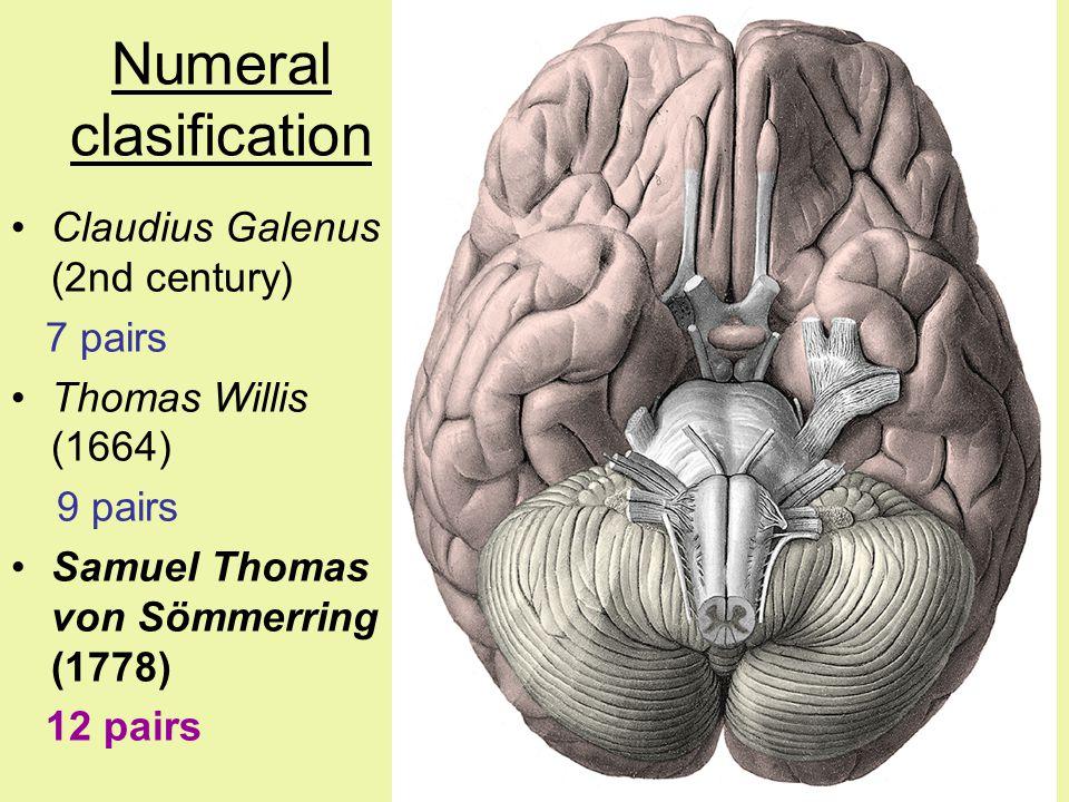 Numeral clasification Claudius Galenus (2nd century) 7 pairs Thomas Willis (1664) 9 pairs Samuel Thomas von Sömmerring (1778) 12 pairs