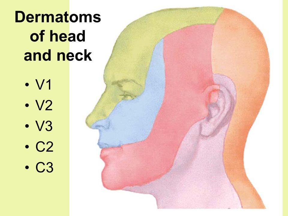 Dermatoms of head and neck V1 V2 V3 C2 C3