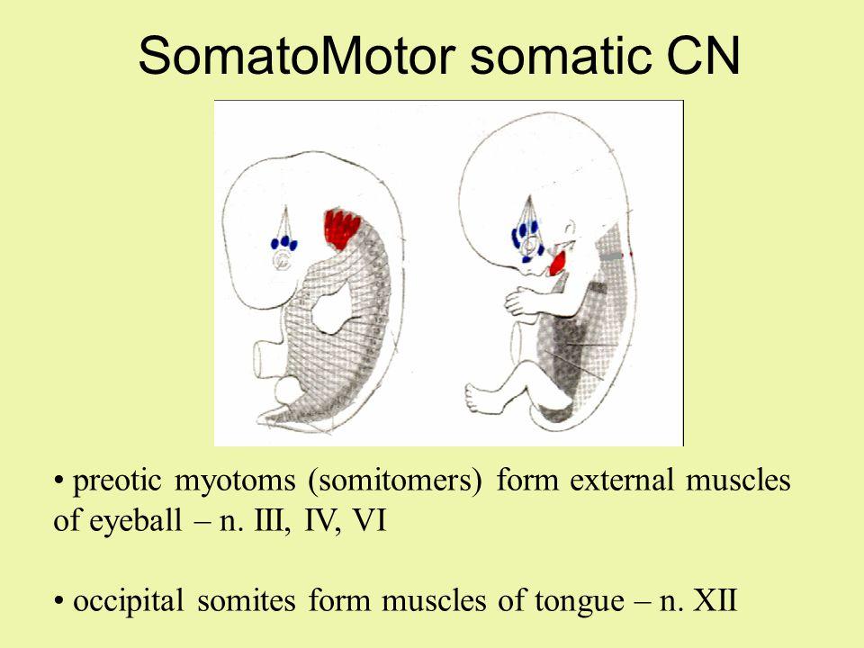 Symptoms of olfaction disroders hyposmia anosmia hyperosmia parsomia kakosmia cranial injury 