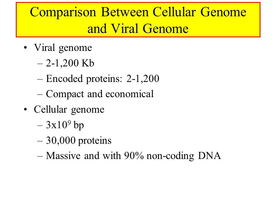 Comparison Between Cellular Genome and Viral Genome Viral genome –2-1,200 Kb –Encoded proteins: 2-1,200 –Compact and economical Cellular genome –3x10