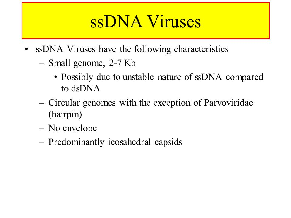 ssDNA Viruses ssDNA Viruses have the following characteristics –Small genome, 2-7 Kb Possibly due to unstable nature of ssDNA compared to dsDNA –Circu