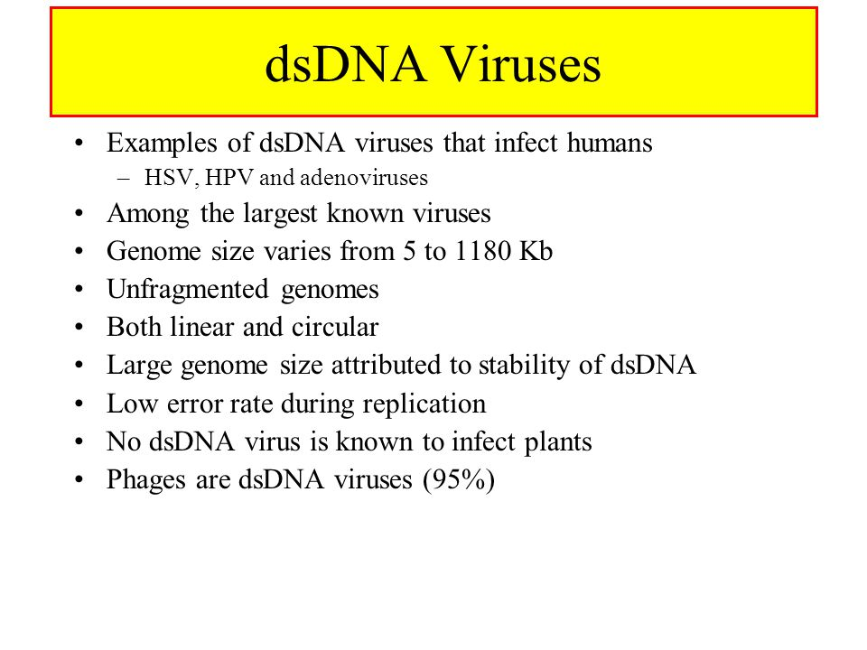 dsDNA Viruses Examples of dsDNA viruses that infect humans –HSV, HPV and adenoviruses Among the largest known viruses Genome size varies from 5 to 118