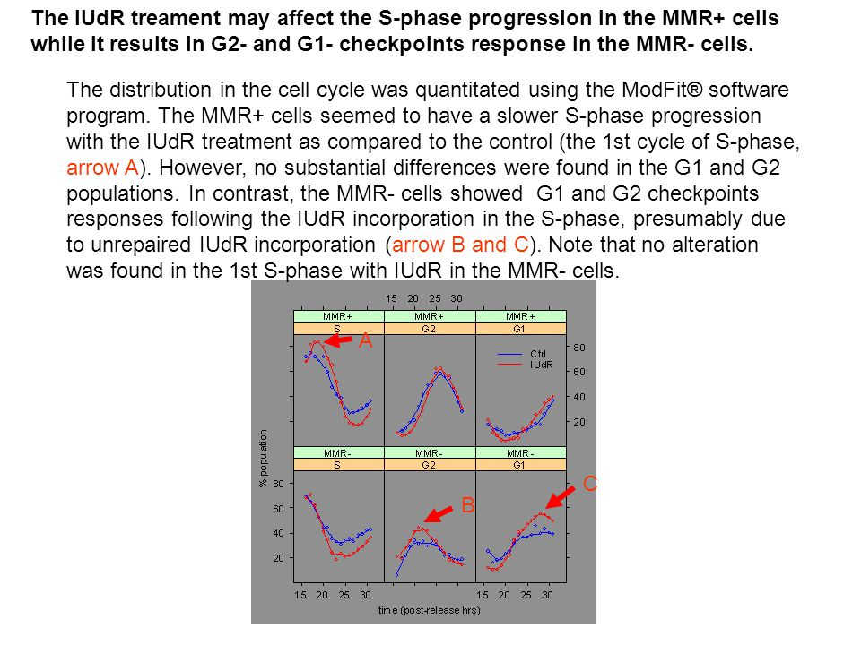 A C B The IUdR treament may affect the S-phase progression in the MMR+ cells while it results in G2- and G1- checkpoints response in the MMR- cells.