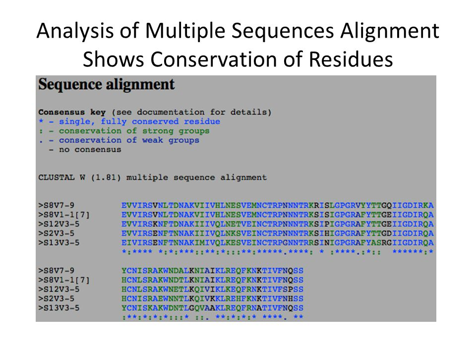 Analysis of Multiple Sequences Alignment Shows Conservation of Residues