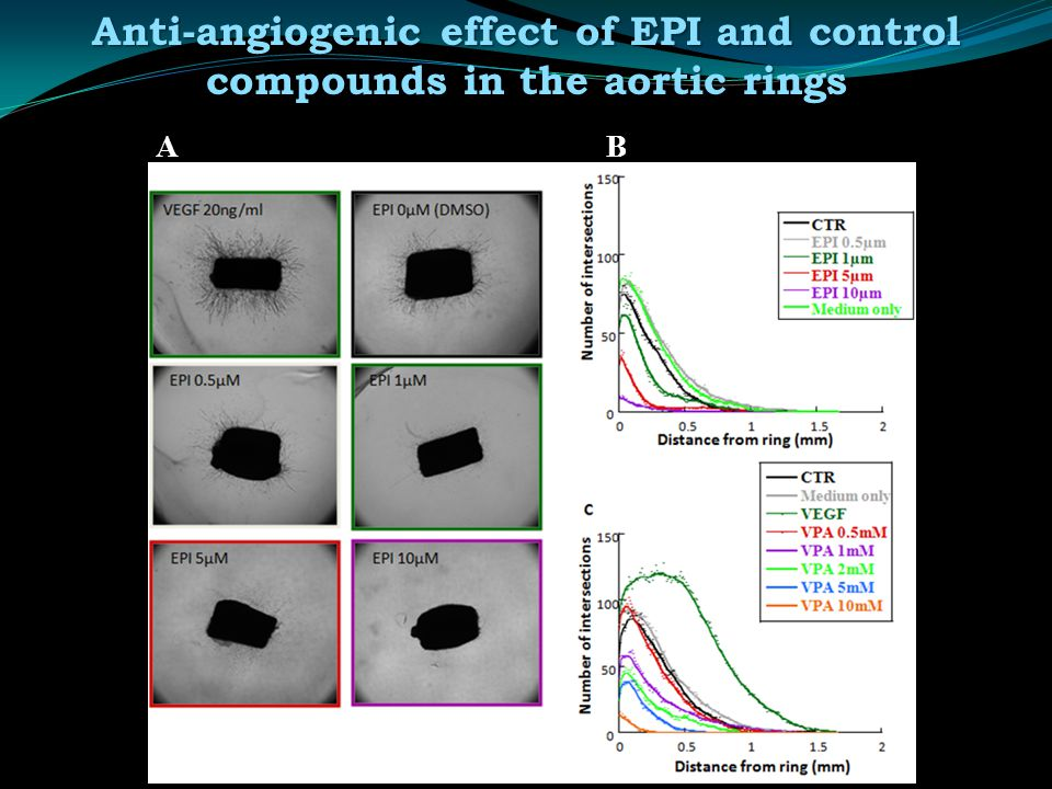 AB Anti-angiogenic effect of EPI and control compounds in the aortic rings