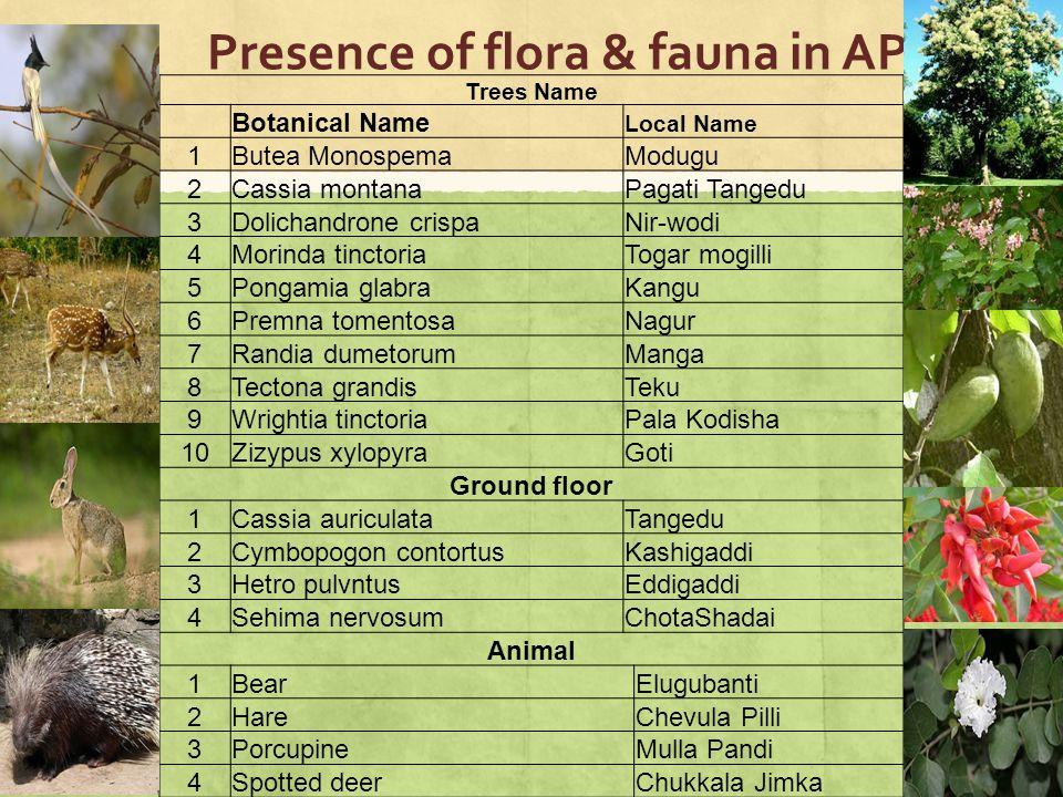 Presence of flora & fauna in AP 19 Trees Name Botanical Name Local Name 1Butea MonospemaModugu 2Cassia montanaPagati Tangedu 3Dolichandrone crispaNir-