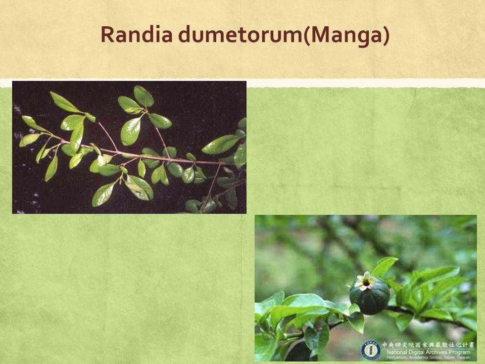 Randia dumetorum(Manga)