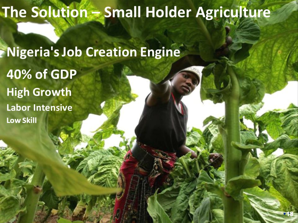 55 The Solution – Small Holder Agriculture 40% of GDP High Growth Labor Intensive Low Skill Nigeria s Job Creation Engine  18