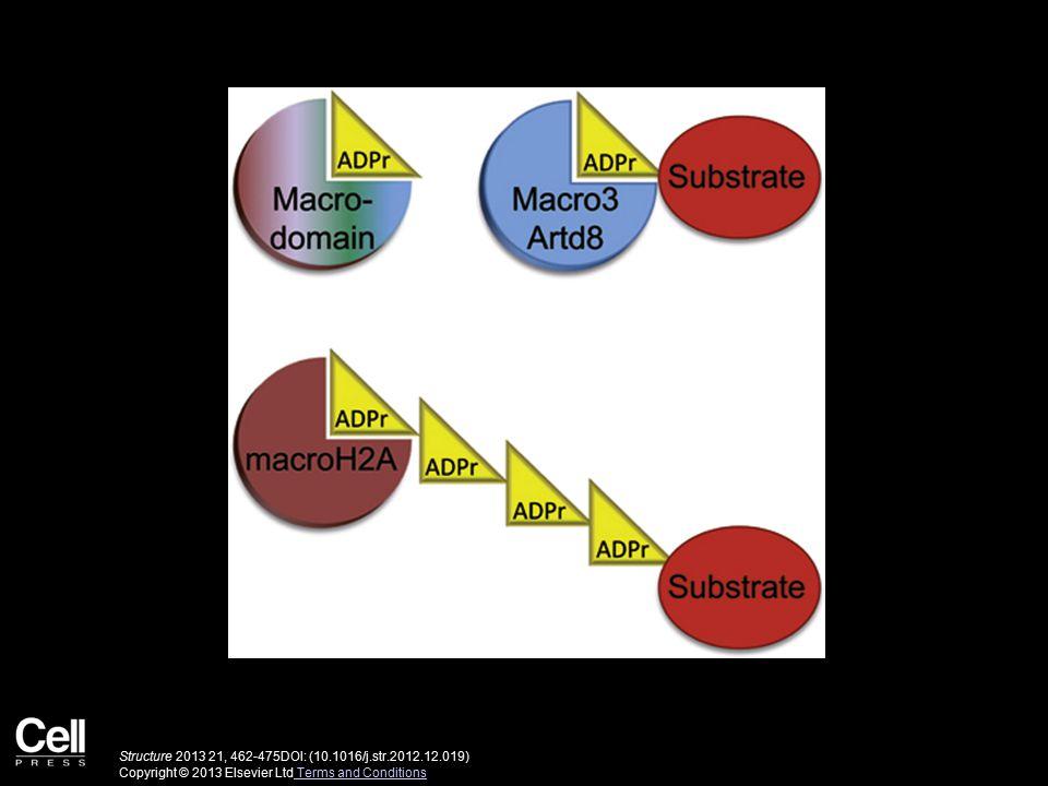 Structure 2013 21, 462-475DOI: (10.1016/j.str.2012.12.019) Copyright © 2013 Elsevier Ltd Terms and Conditions Terms and Conditions