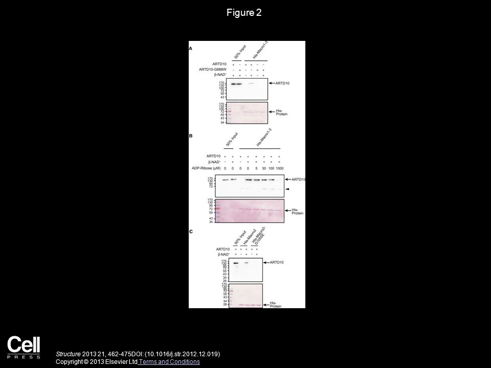 Figure 2 Structure 2013 21, 462-475DOI: (10.1016/j.str.2012.12.019) Copyright © 2013 Elsevier Ltd Terms and Conditions Terms and Conditions