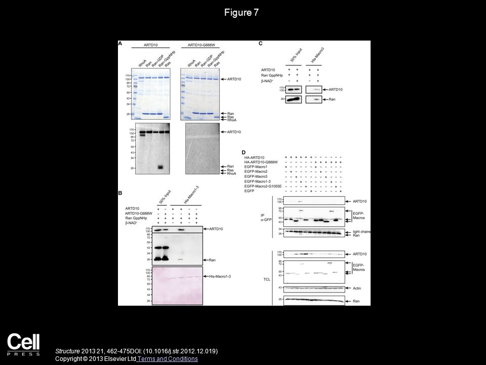 Figure 7 Structure 2013 21, 462-475DOI: (10.1016/j.str.2012.12.019) Copyright © 2013 Elsevier Ltd Terms and Conditions Terms and Conditions
