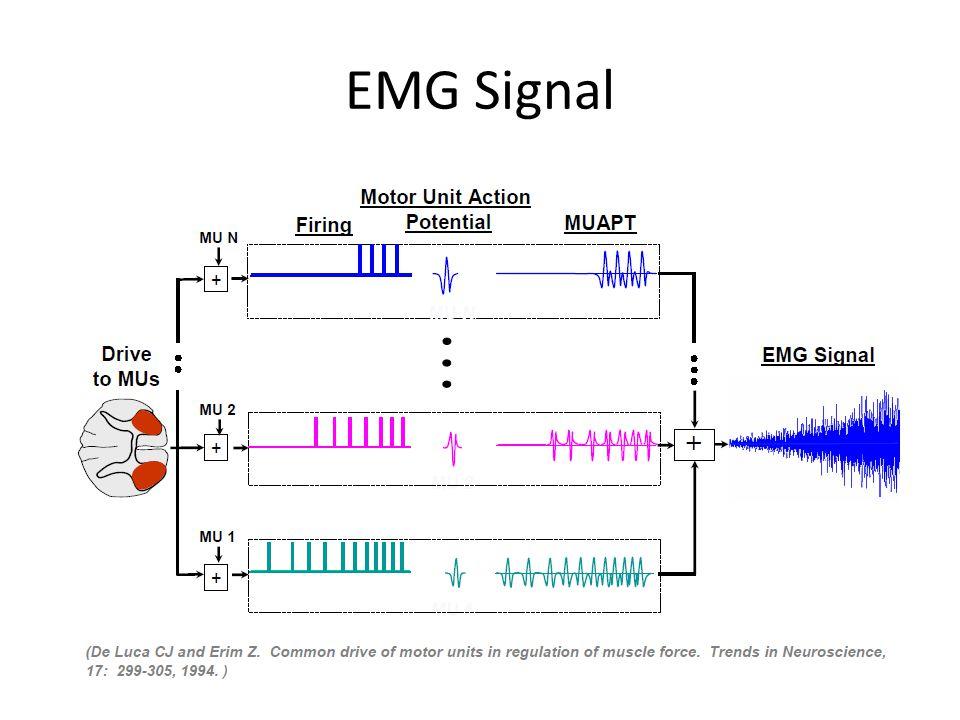 EMG Signal