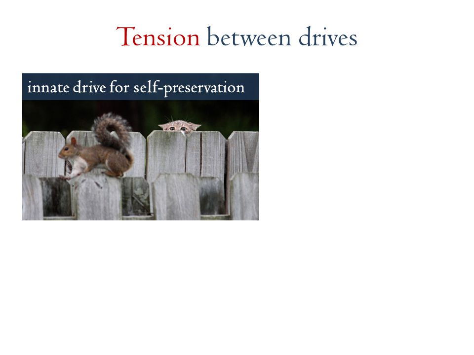 innate drive for self-preservation Tension between drives