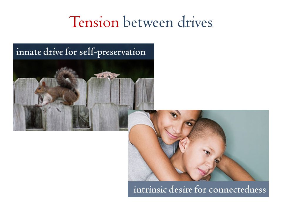 innate drive for self-preservation Tension between drives intrinsic desire for connectedness