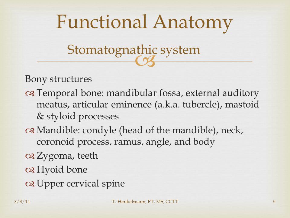  3/8/14T. Henkelmann, PT, MS, CCTT5 Functional Anatomy Stomatognathic system Bony structures  Temporal bone: mandibular fossa, external auditory mea