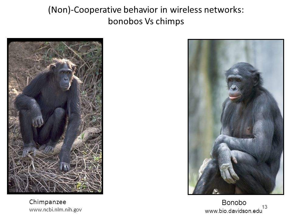 13 (Non)-Cooperative behavior in wireless networks: bonobos Vs chimps Bonobo Chimpanzee www.ncbi.nlm.nih.gov www.bio.davidson.edu