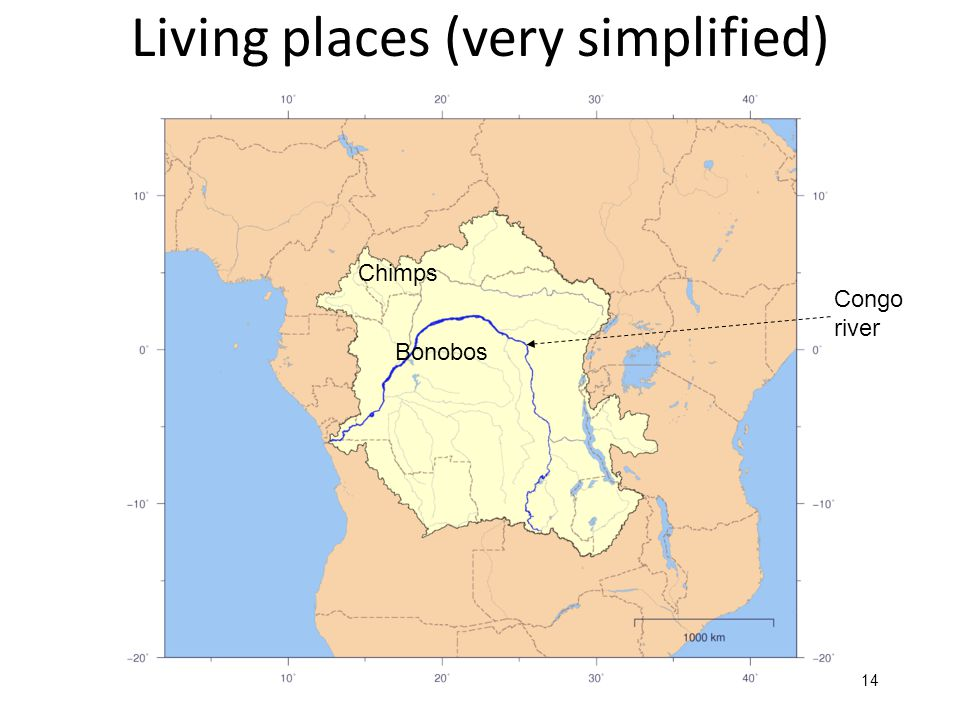 14 Living places (very simplified) Bonobos Chimps Congo river