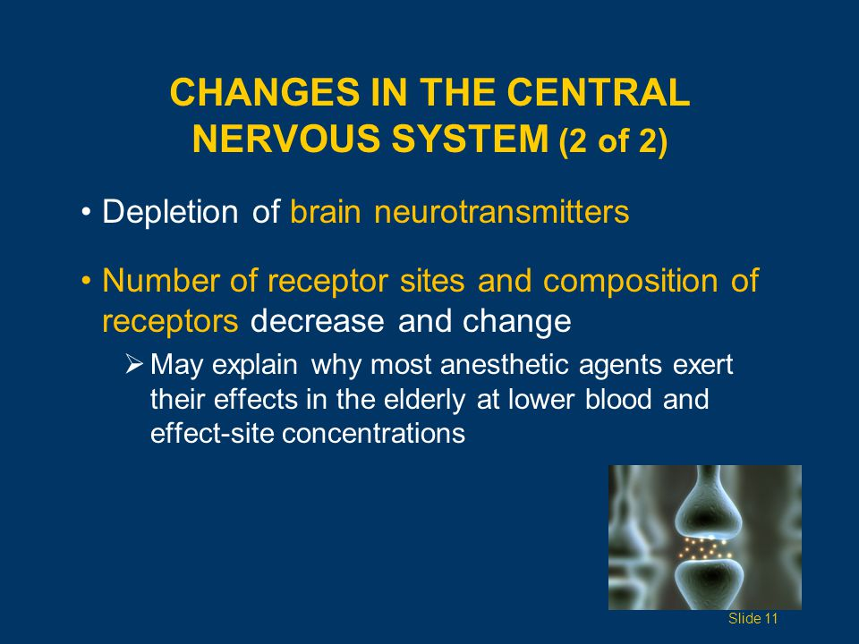 CHANGES IN THE CENTRAL NERVOUS SYSTEM (2 of 2) Depletion of brain neurotransmitters Number of receptor sites and composition of receptors decrease and change  May explain why most anesthetic agents exert their effects in the elderly at lower blood and effect-site concentrations Slide 11