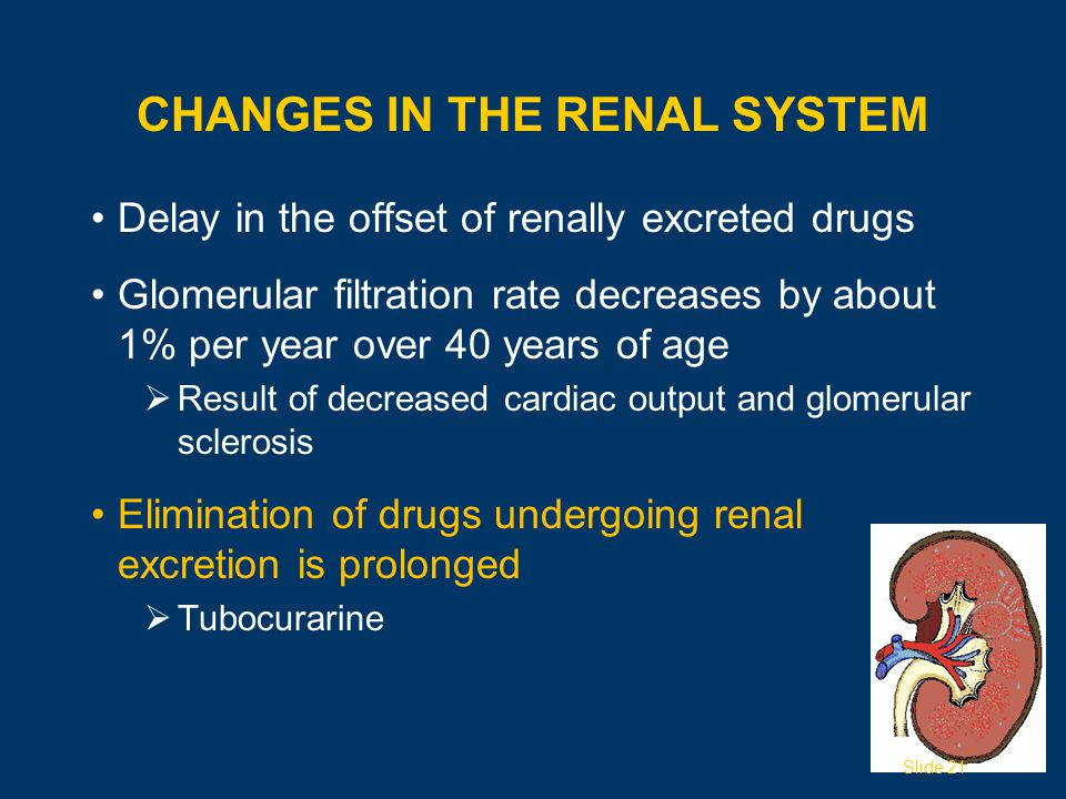 CHANGES IN THE RENAL SYSTEM Delay in the offset of renally excreted drugs Glomerular filtration rate decreases by about 1% per year over 40 years of age  Result of decreased cardiac output and glomerular sclerosis Elimination of drugs undergoing renal excretion is prolonged  Tubocurarine Slide 21