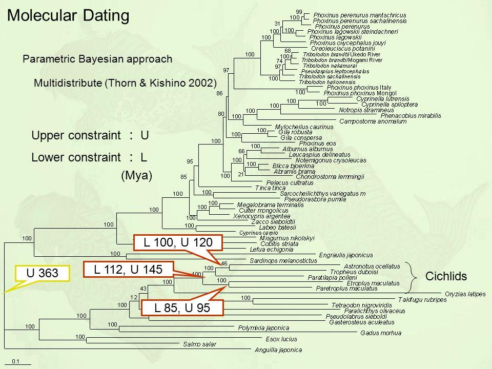 L 100, U 120 L 112, U 145 L 85, U 95 U 363 Molecular Dating (Mya) Upper constraint : U Lower constraint : L Parametric Bayesian approach Multidistribu