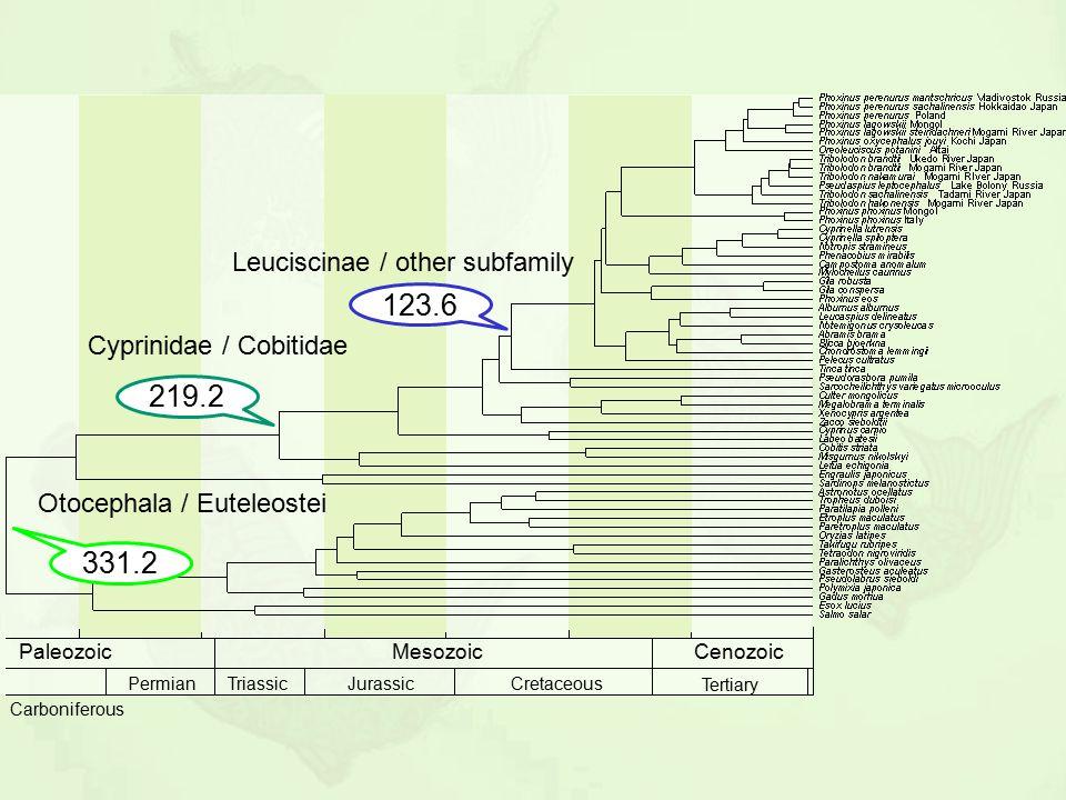 Leuciscinae / other subfamily Cyprinidae / Cobitidae 331.2 Otocephala / Euteleostei 219.2 123.6 MesozoicCenozoicPaleozoic Carboniferous TriassicJurass