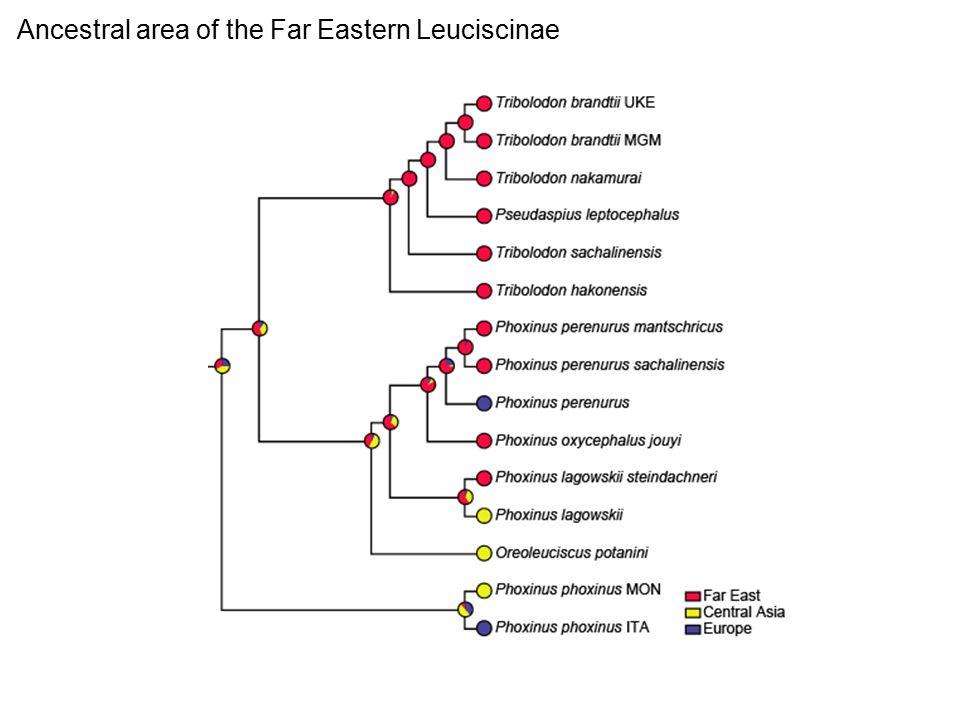 Ancestral area of the Far Eastern Leuciscinae