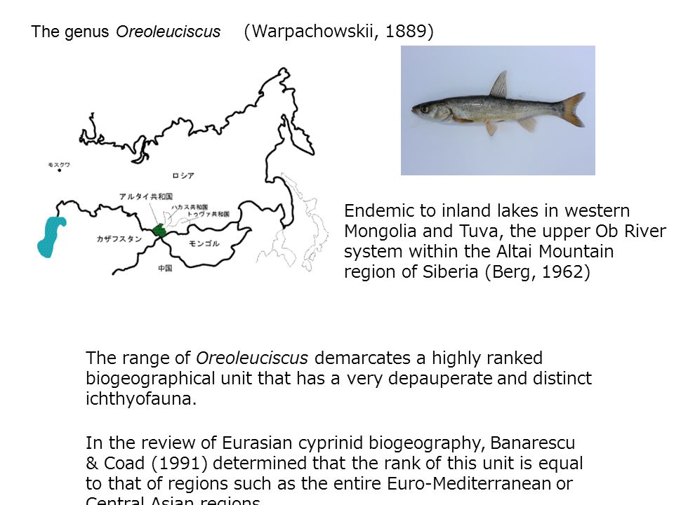 The genus Oreoleuciscus (Warpachowskii, 1889) Endemic to inland lakes in western Mongolia and Tuva, the upper Ob River system within the Altai Mountain region of Siberia (Berg, 1962) The range of Oreoleuciscus demarcates a highly ranked biogeographical unit that has a very depauperate and distinct ichthyofauna.