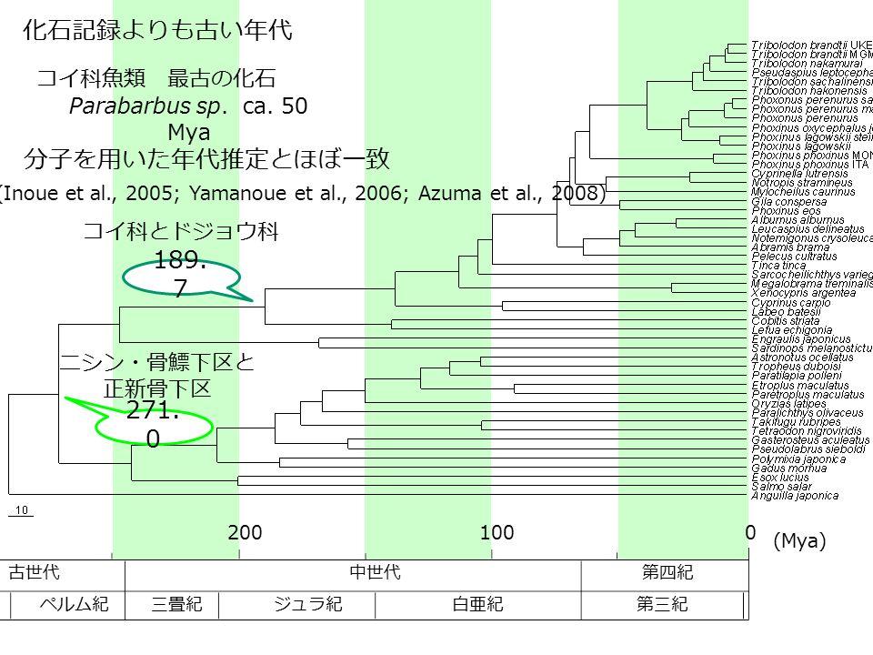 1000200 中世代 第三紀 第四紀古世代 白亜紀ジュラ紀三畳紀ペルム紀 (Mya) コイ科とドジョウ科 271. 0 ニシン・骨鰾下区と 正新骨下区 189. 7 化石記録よりも古い年代 コイ科魚類 最古の化石 Parabarbus sp. ca. 50 Mya 分子を用いた年代推定とほぼ一致