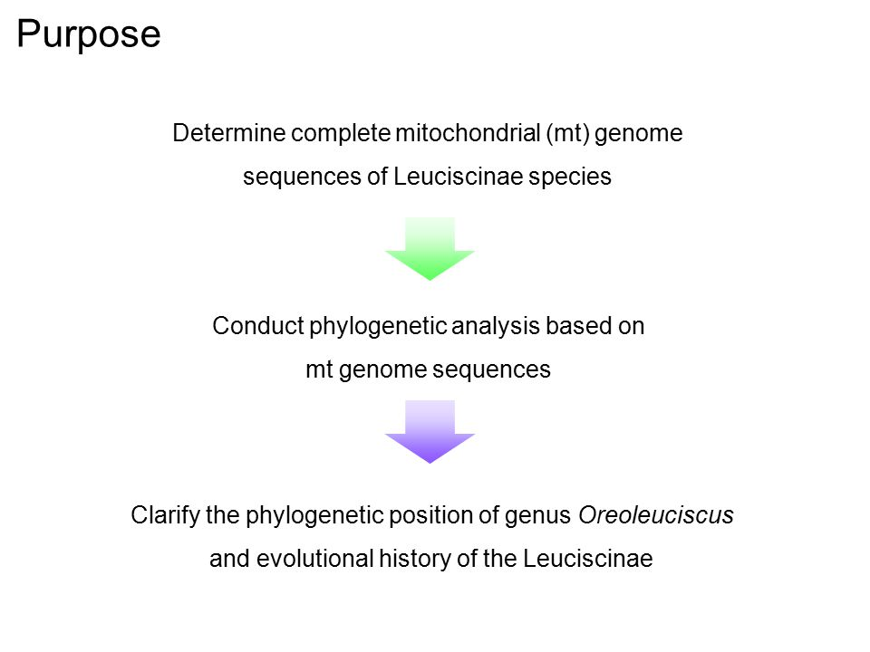 Determine complete mitochondrial (mt) genome sequences of Leuciscinae species Purpose Conduct phylogenetic analysis based on mt genome sequences Clarify the phylogenetic position of genus Oreoleuciscus and evolutional history of the Leuciscinae