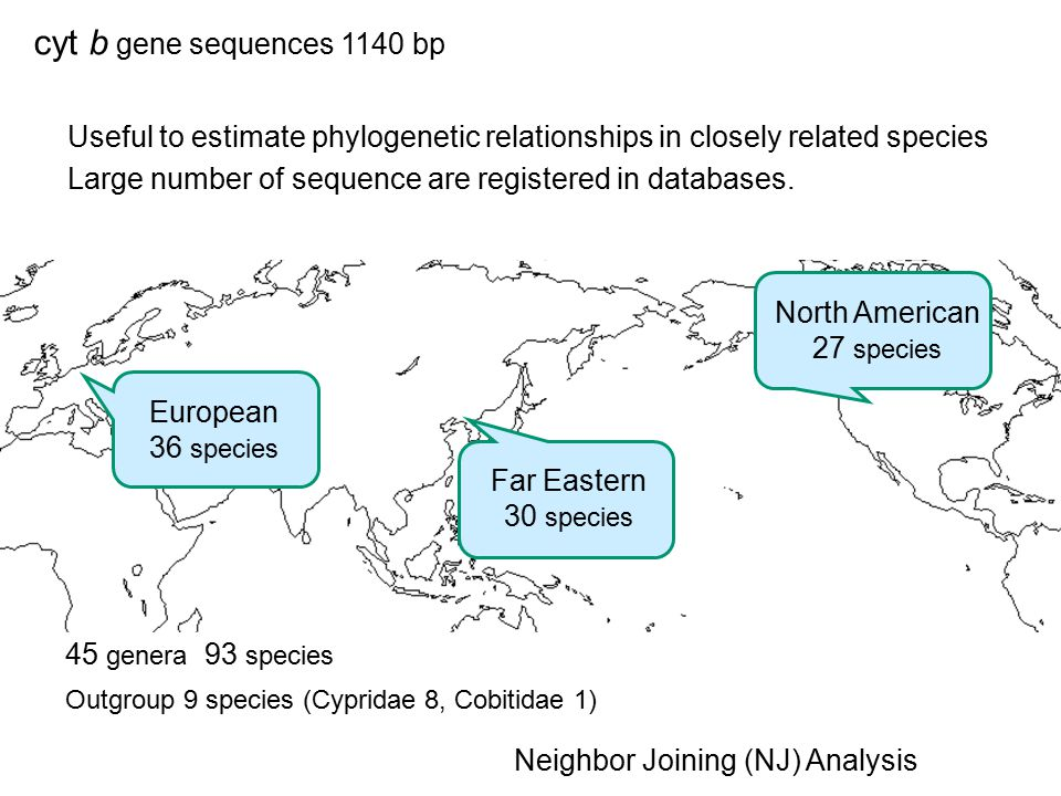 cyt b gene sequences 1140 bp Useful to estimate phylogenetic relationships in closely related species Large number of sequence are registered in databases.