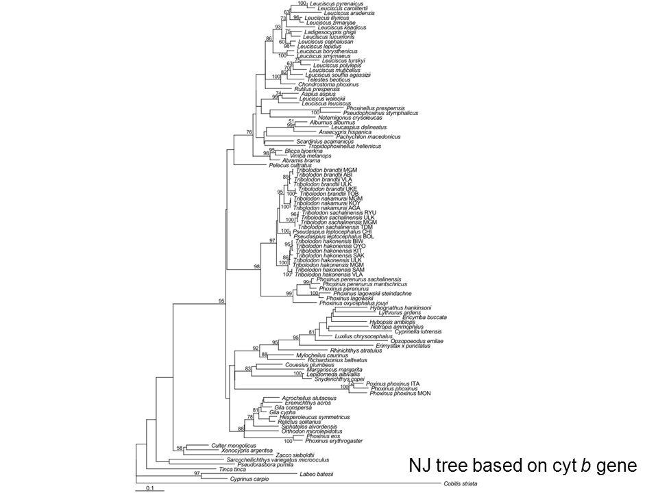 NJ tree based on cyt b gene