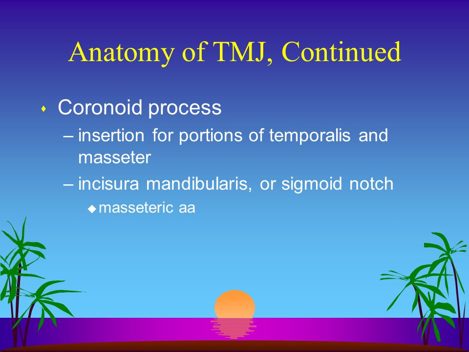 Anatomy of TMJ, Continued s Coronoid process –insertion for portions of temporalis and masseter –incisura mandibularis, or sigmoid notch u masseteric
