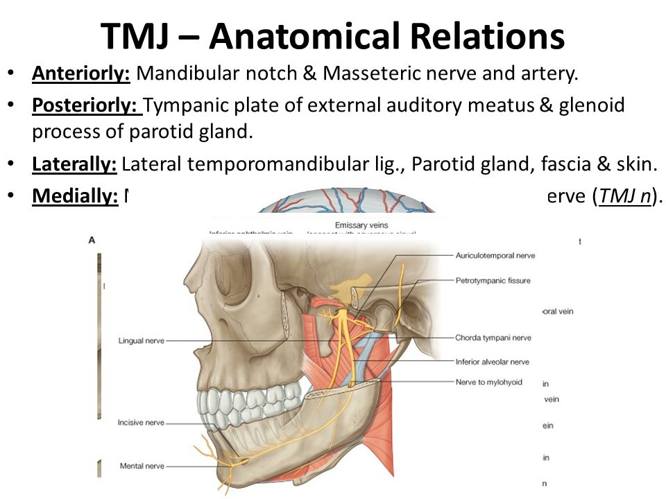 TMJ – Anatomical Relations Anteriorly: Mandibular notch & Masseteric nerve and artery. Posteriorly: Tympanic plate of external auditory meatus & gleno