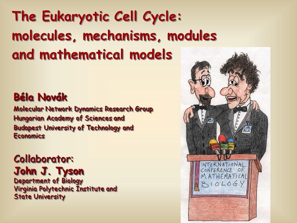 Béla Novák Molecular Network Dynamics Research Group Hungarian Academy of Sciences and Budapest University of Technology and Economics Béla Novák Mole