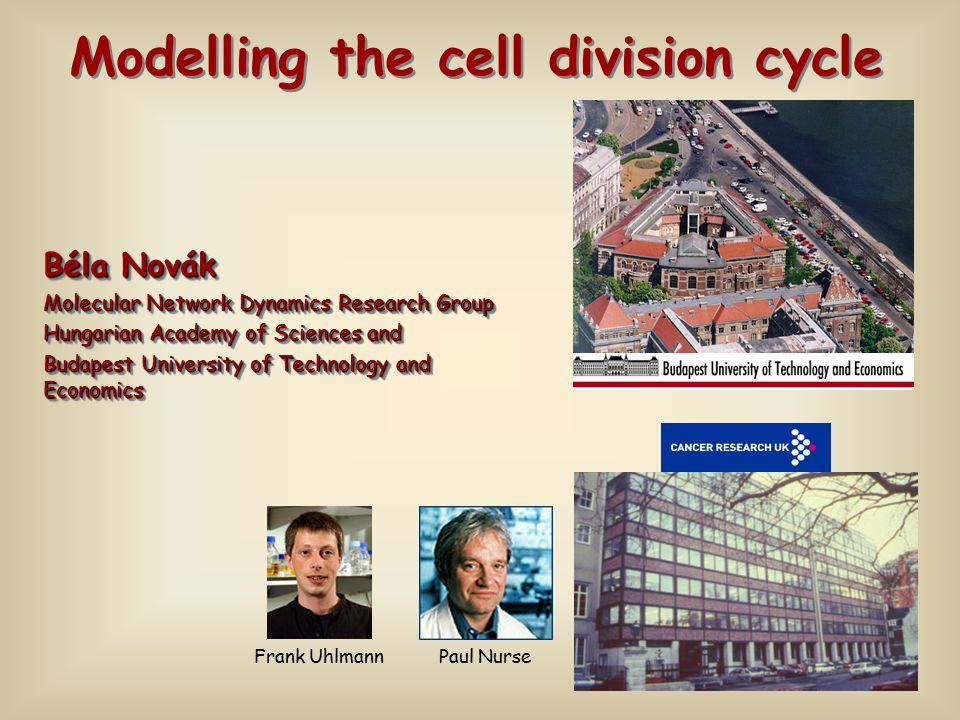 Béla Novák Molecular Network Dynamics Research Group Hungarian Academy of Sciences and Budapest University of Technology and Economics Béla Novák Molecular Network Dynamics Research Group Hungarian Academy of Sciences and Budapest University of Technology and Economics Modelling the cell division cycle Paul Nurse Frank Uhlmann