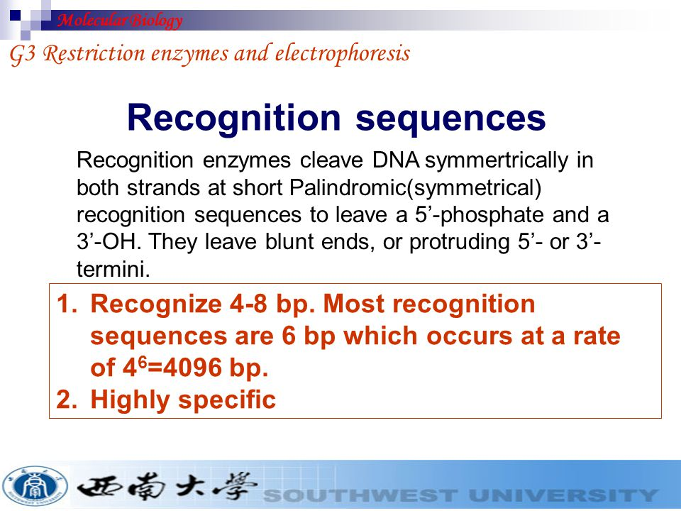 G3-2&3 Restriction sequences&Cohesive ends G3 Restriction enzymes and electrophoresis Fig.