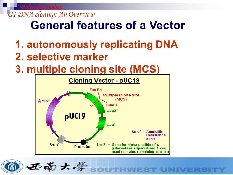 G1-2 Hosts and vectors Most of the routine manipulations involved in gene cloning use E.coli as the host ogranism.