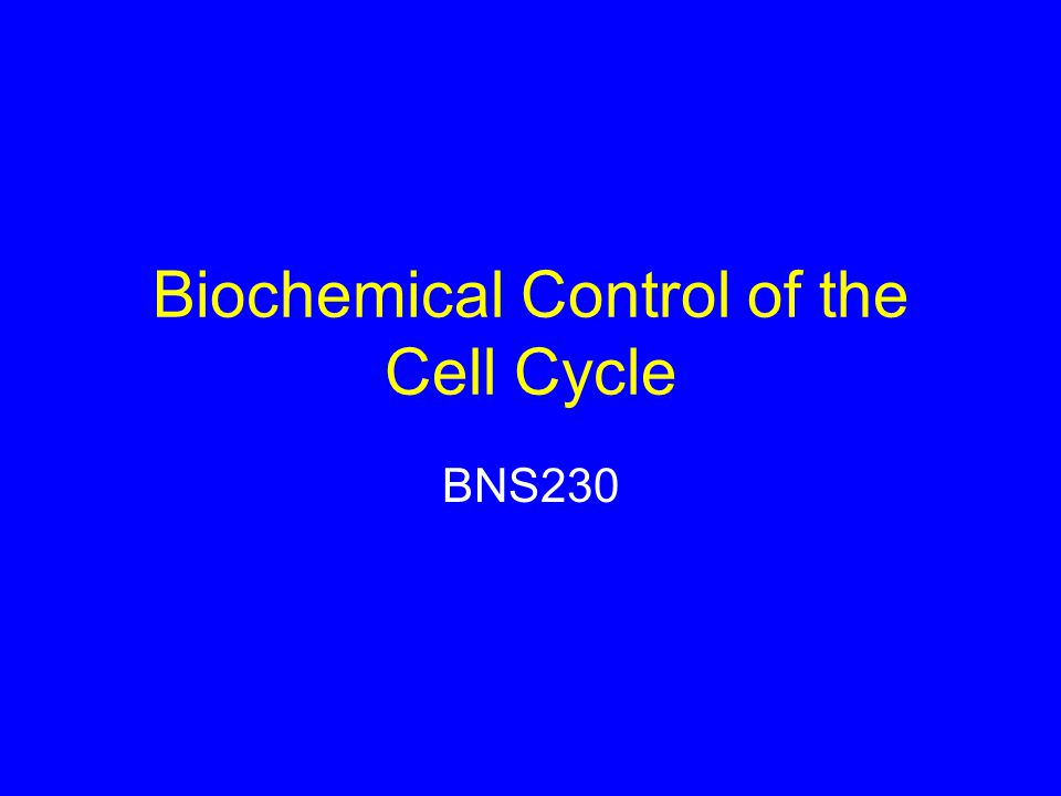 Biochemical Control of the Cell Cycle BNS230