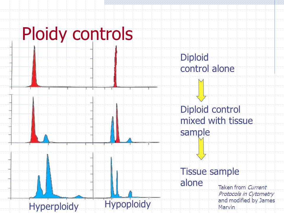 Determining the ploidy of the cells PI, DAPI, EB with appropriate reference standard Aneuploid tumor cell nuclei Trout erythrocytes Diploid normal nuc
