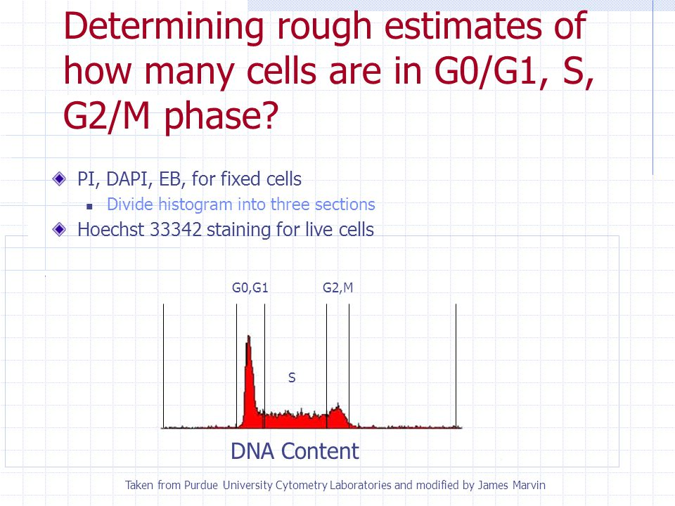 What are the kinetics of your cell population? DNA Content BrdU expression BrdU incorporation Pulse and chase experiment Taken from Current Protocols